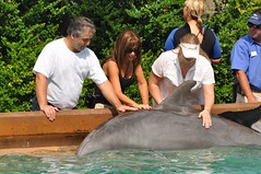 SeaWorld Orlando Dolphin Spotlight Tour Pictures of Missy Ward, Michael Gray, Zena Weist, Chris Heuer and Amanda