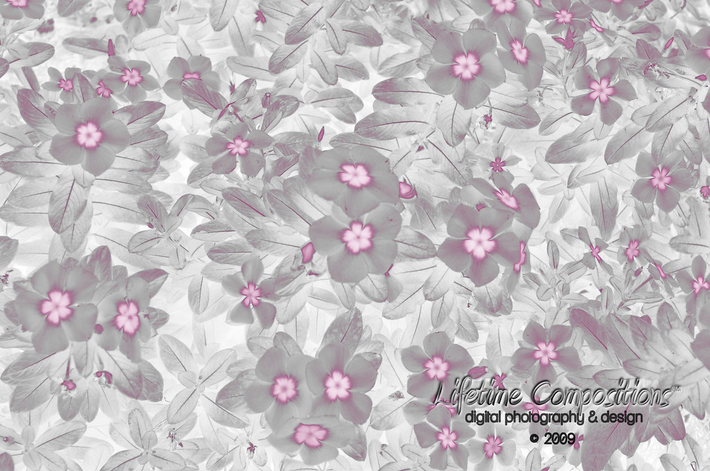Pink & Silver Flower Paper
