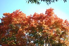 Autumn Leaves (chris.alsup) Tags: animal animals zoo nationalzoo dczoo washingtondczoo
