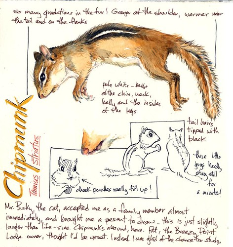 chipmunk study