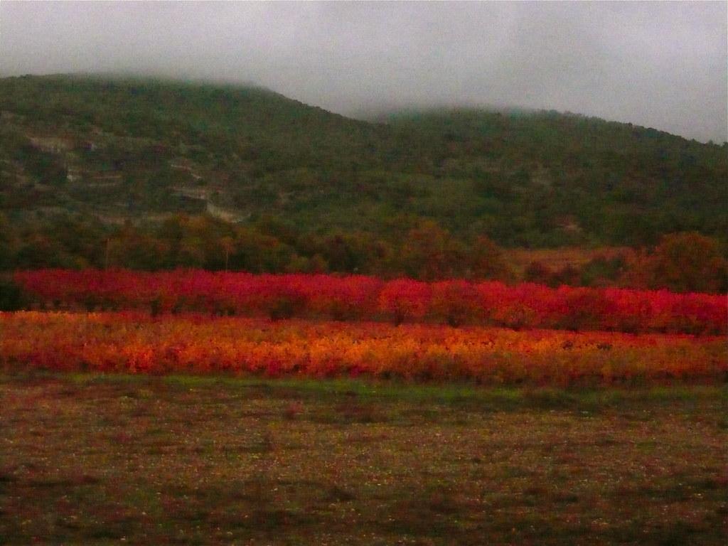 les couguieux autumn sunset