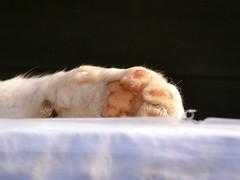 にくきう (hamapenguin) Tags: animal cat paw feline neko 猫 straycat ネコ 肉球 野良猫
