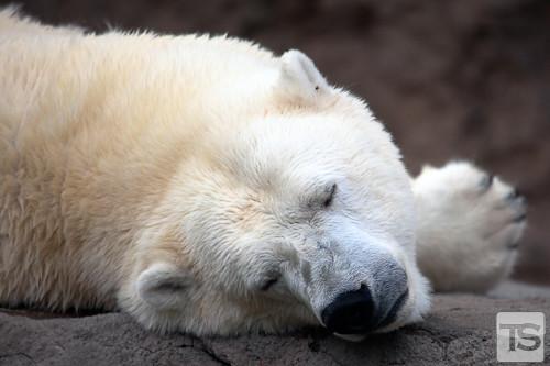 Cozy Slumber