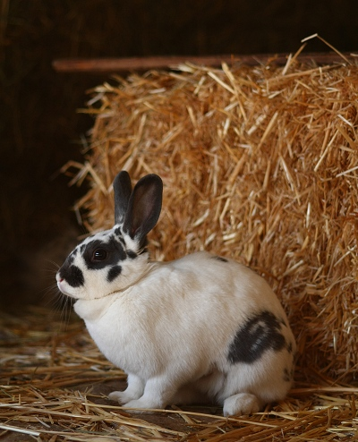 New bunny Larissa