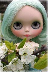 Plum Blossoms 24/365 BL♥VED