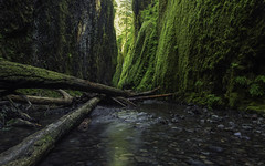 If a Tree Falls in the Gorge... (carolina_sky) Tags: oneontagorge portland oregon columbiariver canyon river stone rock wall moss logs trees pentaxk1 pentax2470mm pixelshift