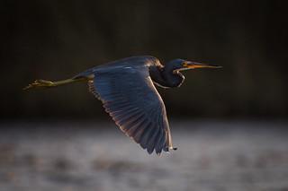 Twilight Tri Fly By