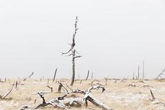 Noir Flohay, High Fens Belgium (Renate van den Boom) Tags: 02febuari 2017 belgië boom europa hogevenen jaar landschap maand natuur renatevandenboom seizoenen winter