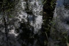 Abstract Pollockesque Photo (raykhrud) Tags: abstract blurred pollock sal50f14