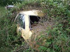 Opel Rekord in the weeds (Scrawb) Tags: junkyard scrapyard oldcars rustycar kildare oldrustycar