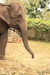 IMG_7947 (rafaelhabermann) Tags: elephant big fat alia elefante mamifero femea paquiderme