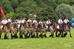 PH_8359 (Peet de Rouw) Tags: horse holland competition trial peet rockanje werkpaard powerhorse trekpaard denachtdienst peetderouw peetderouwfotografie