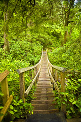 Wood Bridge at Oswald State Park (brianzupunski) Tags: park wood travel bridge oregon forest state oswald woodbridge oswaldstatepark mentorseries oregonstatepark