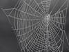 web (Leo Reynolds) Tags: bw photoshop canon iso200 is web 100mm powershot dew f57 0025sec hpexif leol30random sx10 groupbw groupnorwich groupsepiabw groupblackwhitepics xleol30x xratio4x3x xxx2009xxx