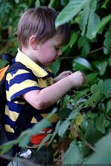 picking blackberries - _MG_0643