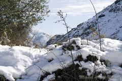 IMG_8073 (Miguel Angel Mora (GSi_PoweR)) Tags: espaa snow andaluca carretera nieve nevada sunday bosque granada costadelsol domingo maroma mlaga mountainroad meteorologa axarqua puertomontaa zafarraya sierraalmijara caosalcaiceria