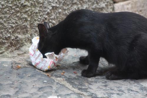 Cat Eating Conrad