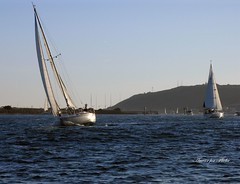 Sailing In San Diego Bay (RUSSIANTEXAN) Tags: california west canon coast marine san sailing pacific diego russiantexan explored anvarkhodzhaev russiantexas exploredaug112009358 svetan svetanphotography