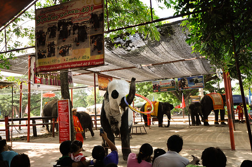 Entertainer Elephant