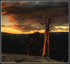 Sentinel Dome Tree II (DM Weber) Tags: california sunset deadtrees sentineldome yosemitenp explored 9112009 psa148 dmweber