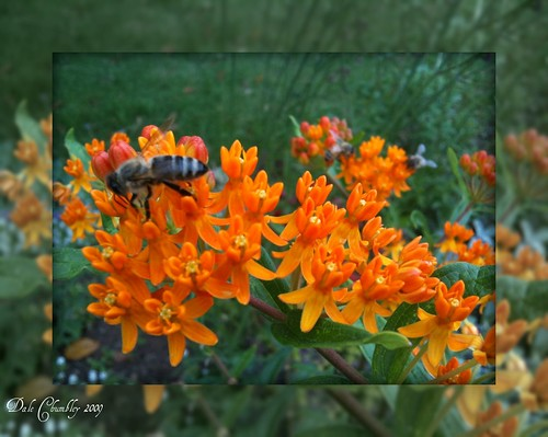 Framed Orange Buzz