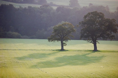 Two trees in the morning meadow