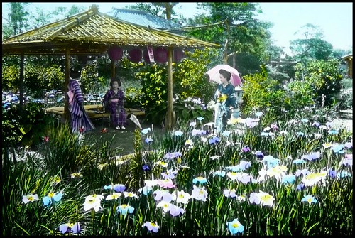 THREE GEISHA RESTING IN THE HORIKIRI IRIS GARDENS in OLD TOKYO, JAPAN