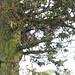 Robin in Broomfield