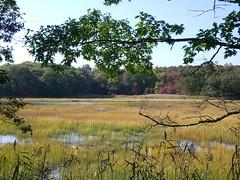 Post Oak over the marsh (ecbasil5) Tags: taxonomy richardsonproperty