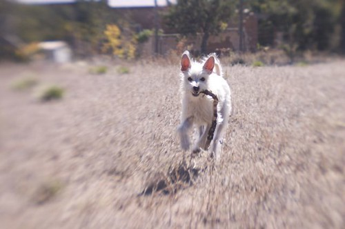 dog social 7