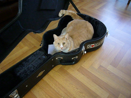 Luther in the guitar case