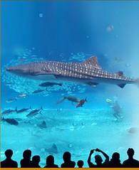 Marine life park 1
