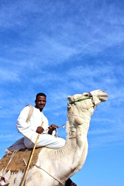 Cairo - Camel Market - 43
