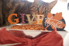 Ginny appreciates Thanksgiving too. (Tricia@cheeky attitude) Tags: thanksgiving cats kittens ginny furrymonsters