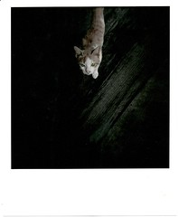 Hand coloring_0003 (heronop) Tags: bw rolleiflex cat paper thailand holga hand trix 8x10 400 coloring rc ilford canoscan gfn bamboogrove 35f 8800f thegrandpalacebangkok