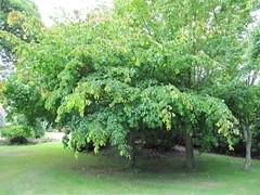 IMG_2505 (wallygrom) Tags: england westsussex treehouse angmering honeylane cancerwise