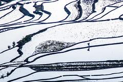Yuanyang, China (gstads) Tags: yunnan china honghe yuanyang rice terrace terraces riceterrace riceterraces paddy paddyfields ricepaddy ricepaddyfields reflection pattern patterns silhouette sunrise bw blackandwhite noiretblanc monochrome lines curves geometry bnw