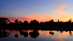 Sunset February 17th (Jim Mullhaupt) Tags: sundown dusk sun evening endofday sky clouds color red gold orange pink yellow blue tree palm outdoor silhouette weather tropical exotic wallpaper landscape nikon coolpix p900 pond lake water reflection manateecounty bradenton florida