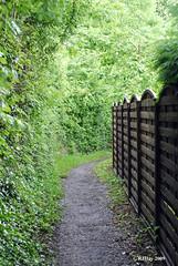 Skirting a Back Yard Fence