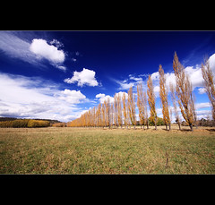 A train made form trees and and sky made from ... ([ Kane ]) Tags: blue sky tree clouds rural landscape farm fluffy australia line nsw qld queensland kane gledhill kanegledhill kanegledhillphotography