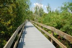 Boardwalk at Jean Lafitte