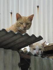 Cats Staring At Me