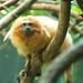Woodland Park Zoo Seattle 009