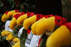 Jardim zoolgico de Gramado - 120 (Luiz Filipe Varella) Tags: rio grande do aves jardim zoolgico animais pssaros sul papagaio arara gramado gachas alignements