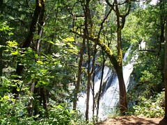 Through the trees (Haydi_313) Tags: trees waterfall mossy