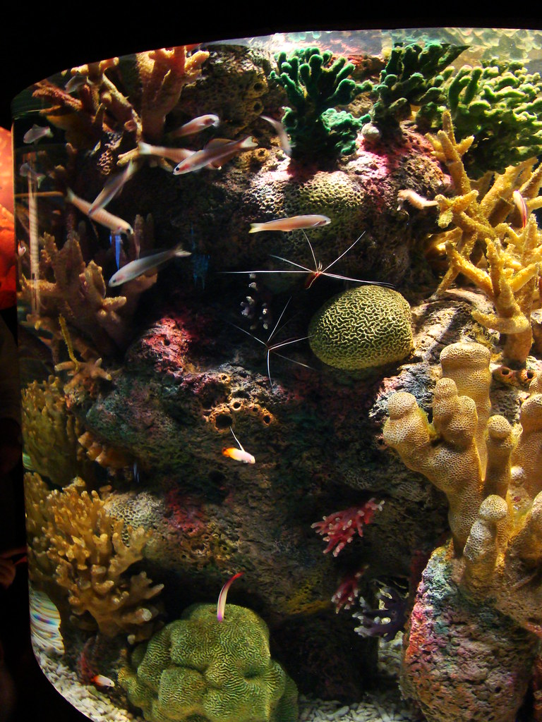 DSC01879 Monterey Bay Aquarium coral tank