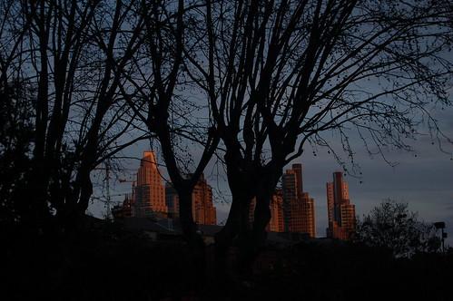 La ciudad y los árboles