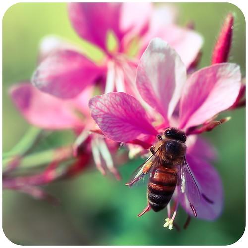 Bee Bandwagon