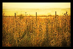 The Breathing (Abra K.) Tags: sun sunlight mist sunrise poetry poem bulgaria journey poesia earlymorninglight deniselevertov thebreathing summerdream2009