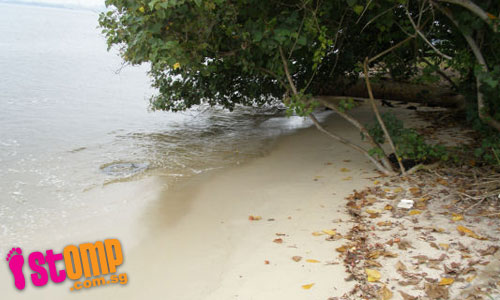 Waves pounding shore cause destruction to coast and trees at beautiful beach in Johor